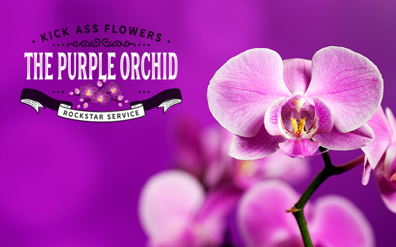 Purple Orchid Flowers - 50% OFF at Purple Orchid Flowers